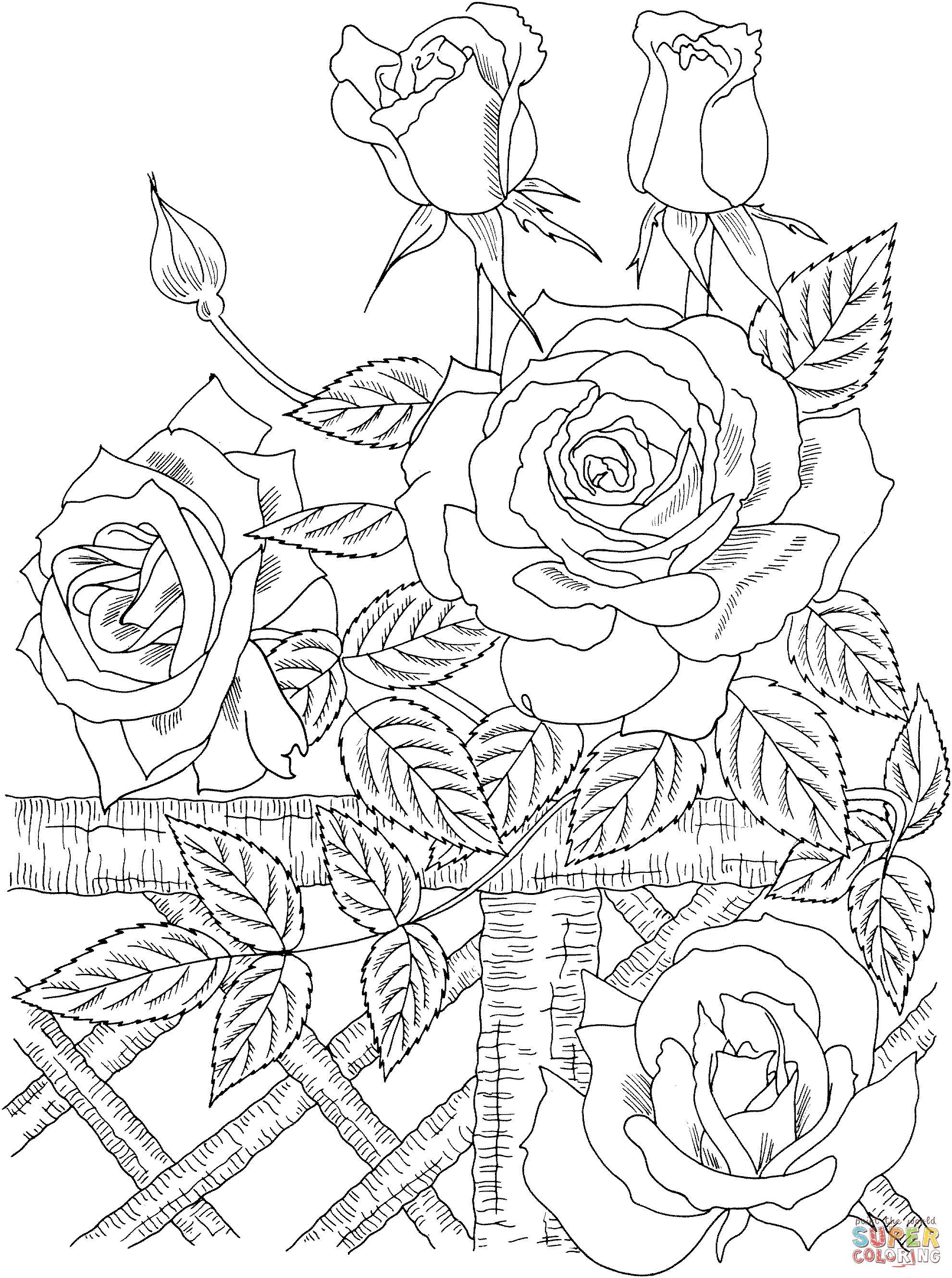Tranh Tô Màu Hoa Hồng 2