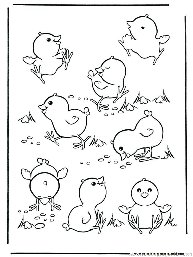 Easter Chicks Coloring Page 18