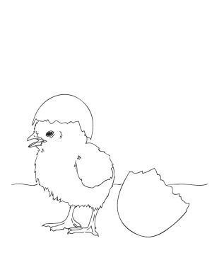 Easter Chicks Coloring Page 63