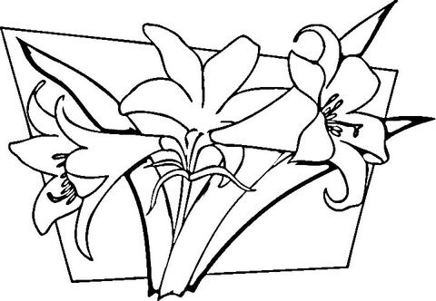 Easter Lily Coloring Page 10