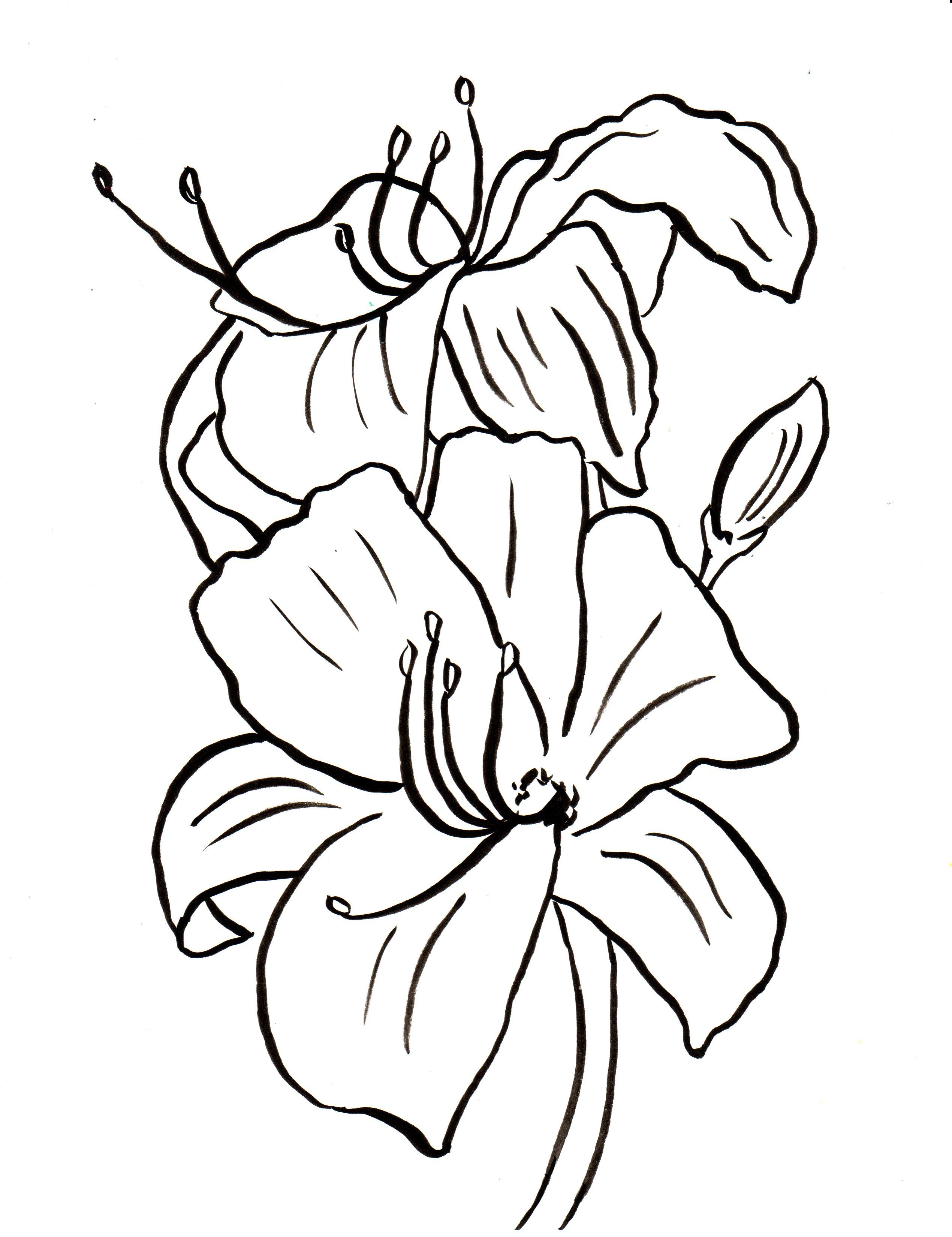 Easter Lily Coloring Page 16
