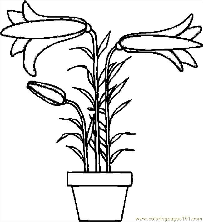 Easter Lily Coloring Page 17