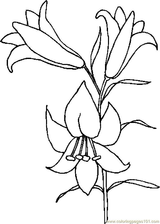 Easter Lily Coloring Page 18