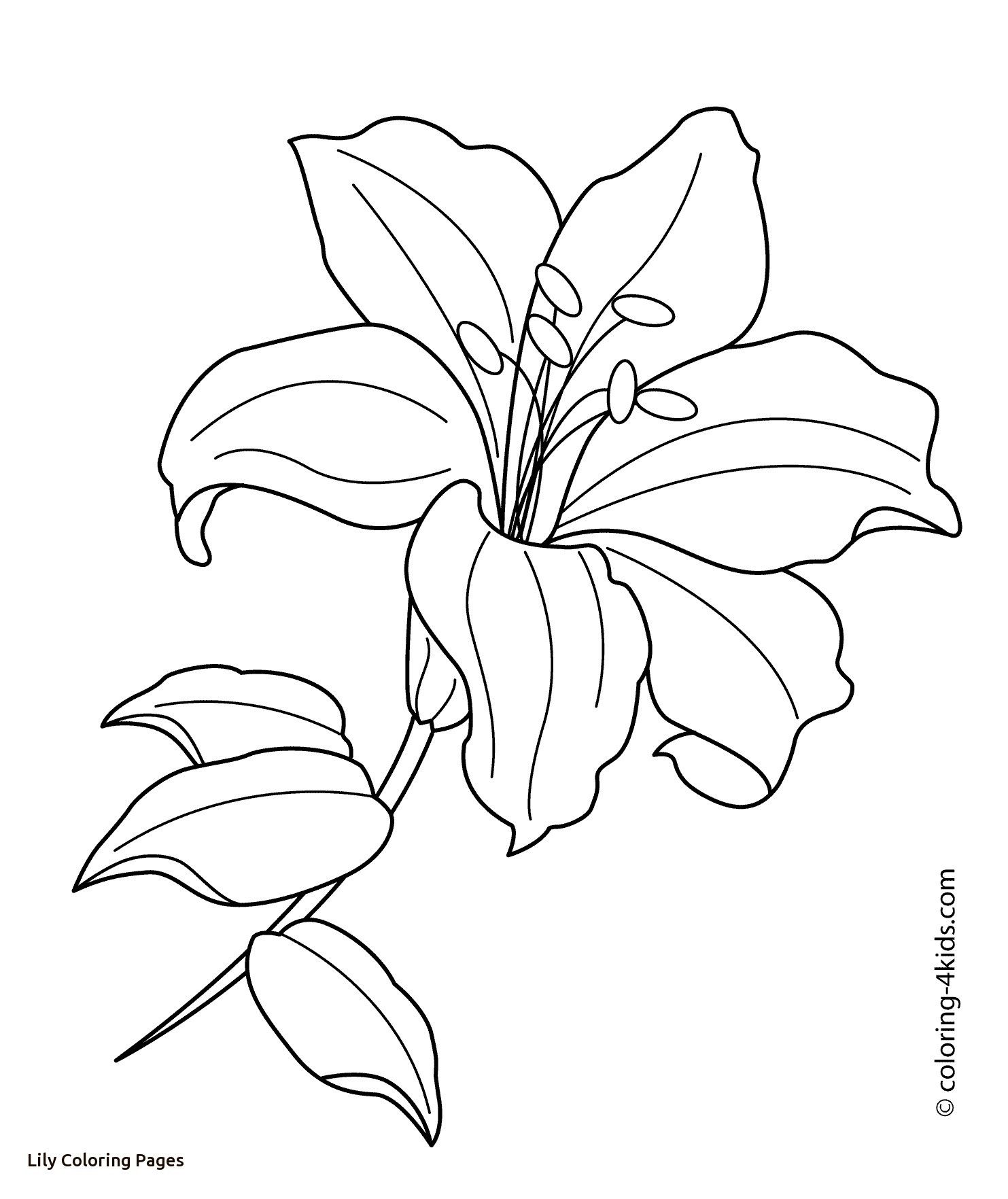 Easter Lily Coloring Page 19