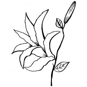 Easter Lily Coloring Page 2