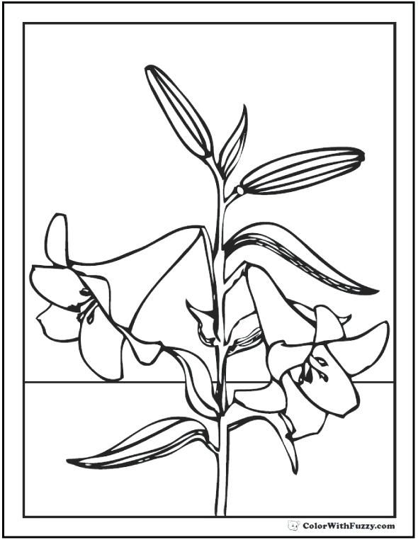 Easter Lily Coloring Page 21
