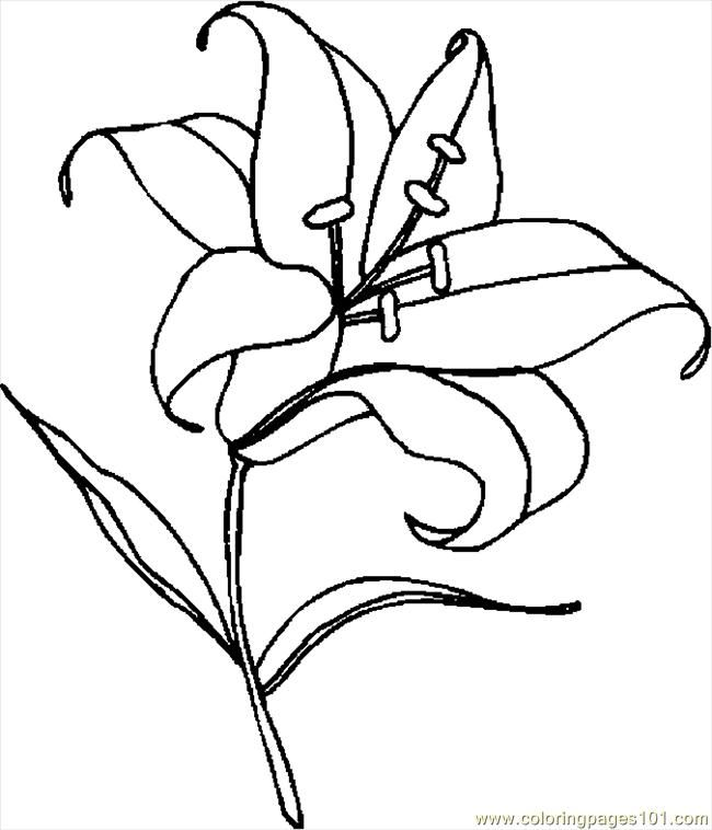 Easter Lily Coloring Page 22