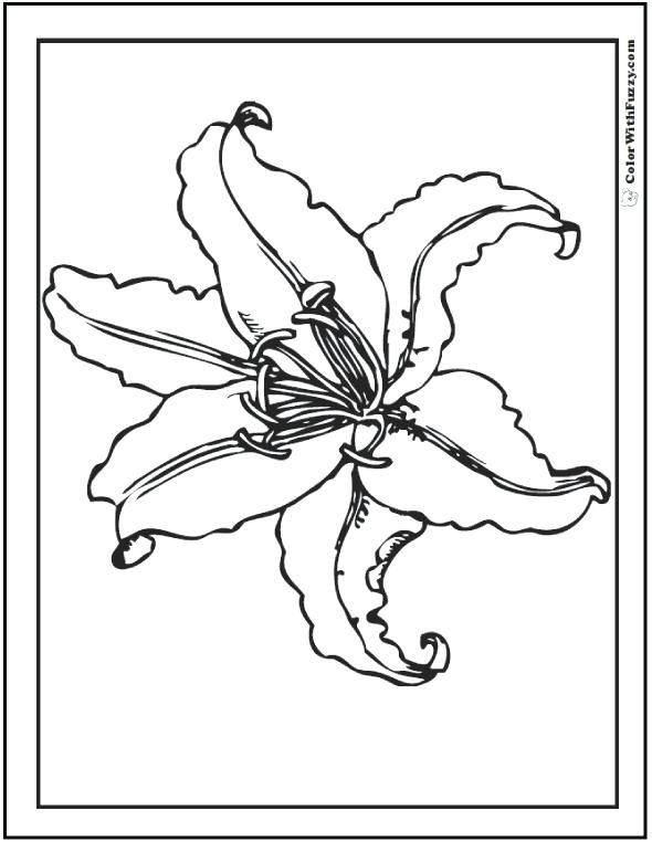 Easter Lily Coloring Page 23