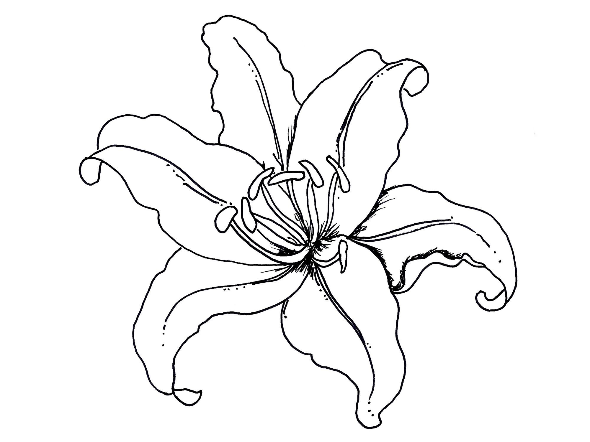 Easter Lily Coloring Page 24