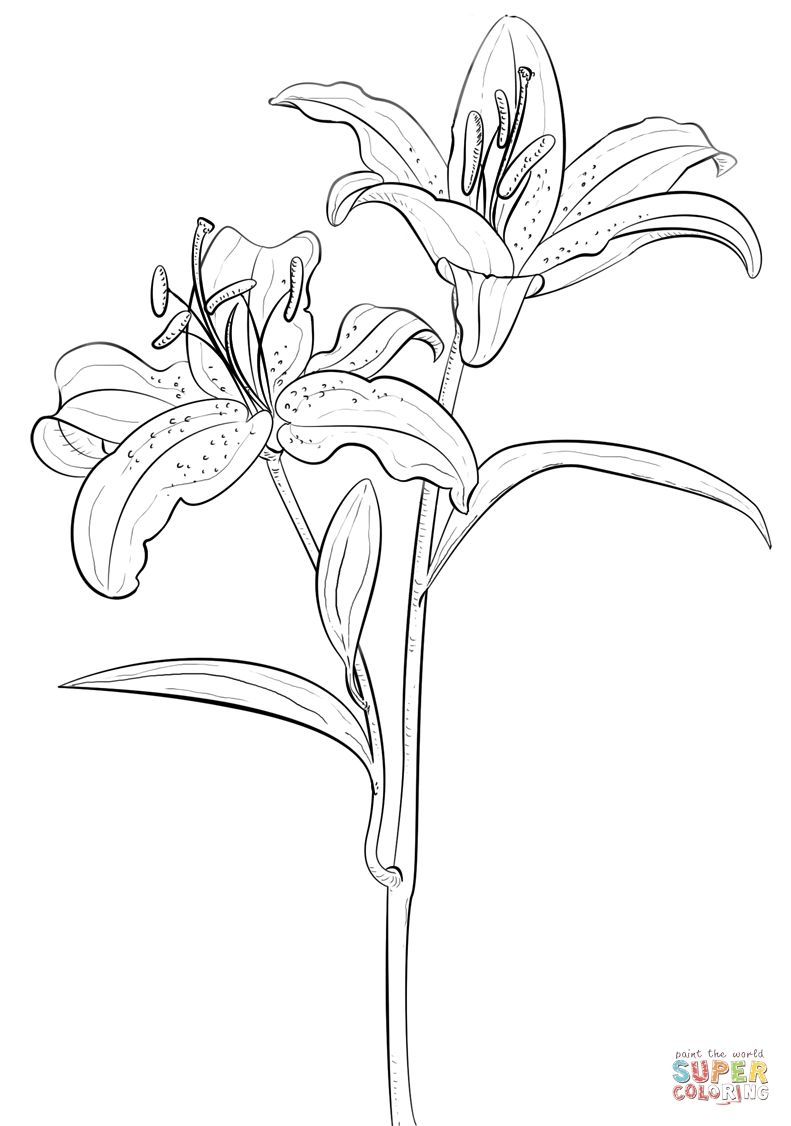 Easter Lily Coloring Page 26
