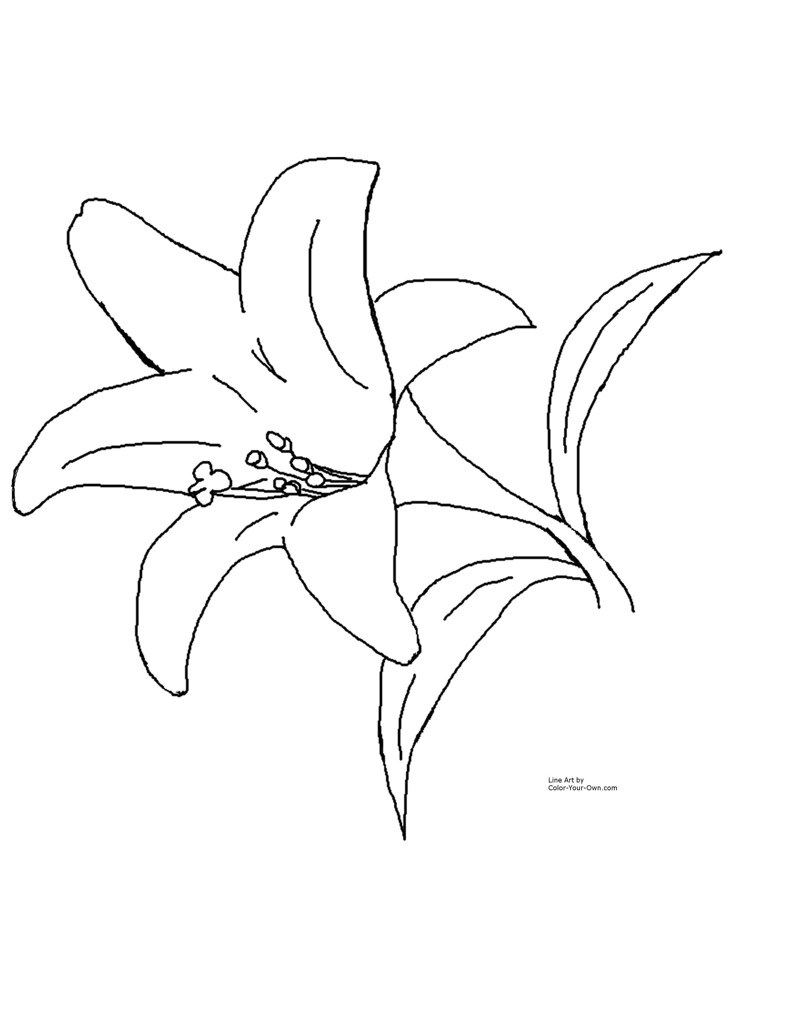 Easter Lily Coloring Page 3