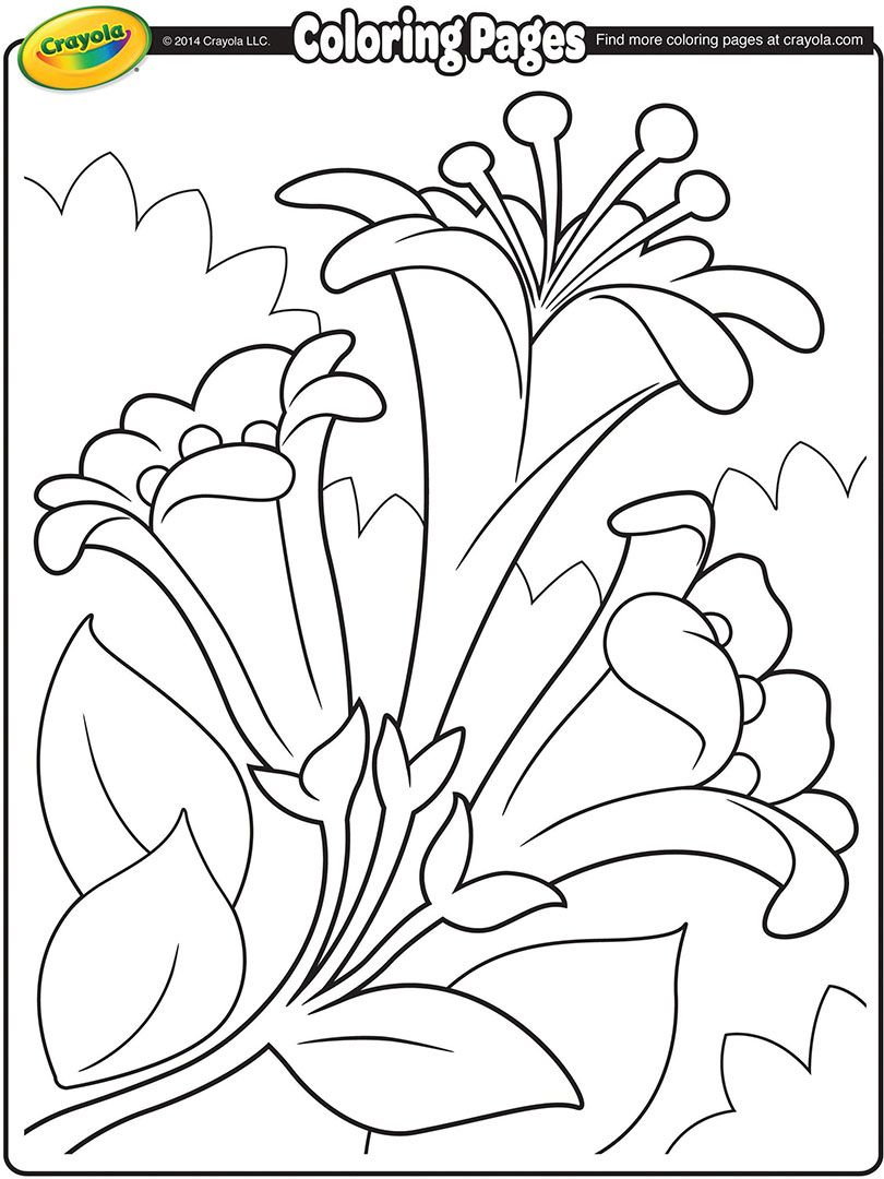 Easter Lily Coloring Page 32