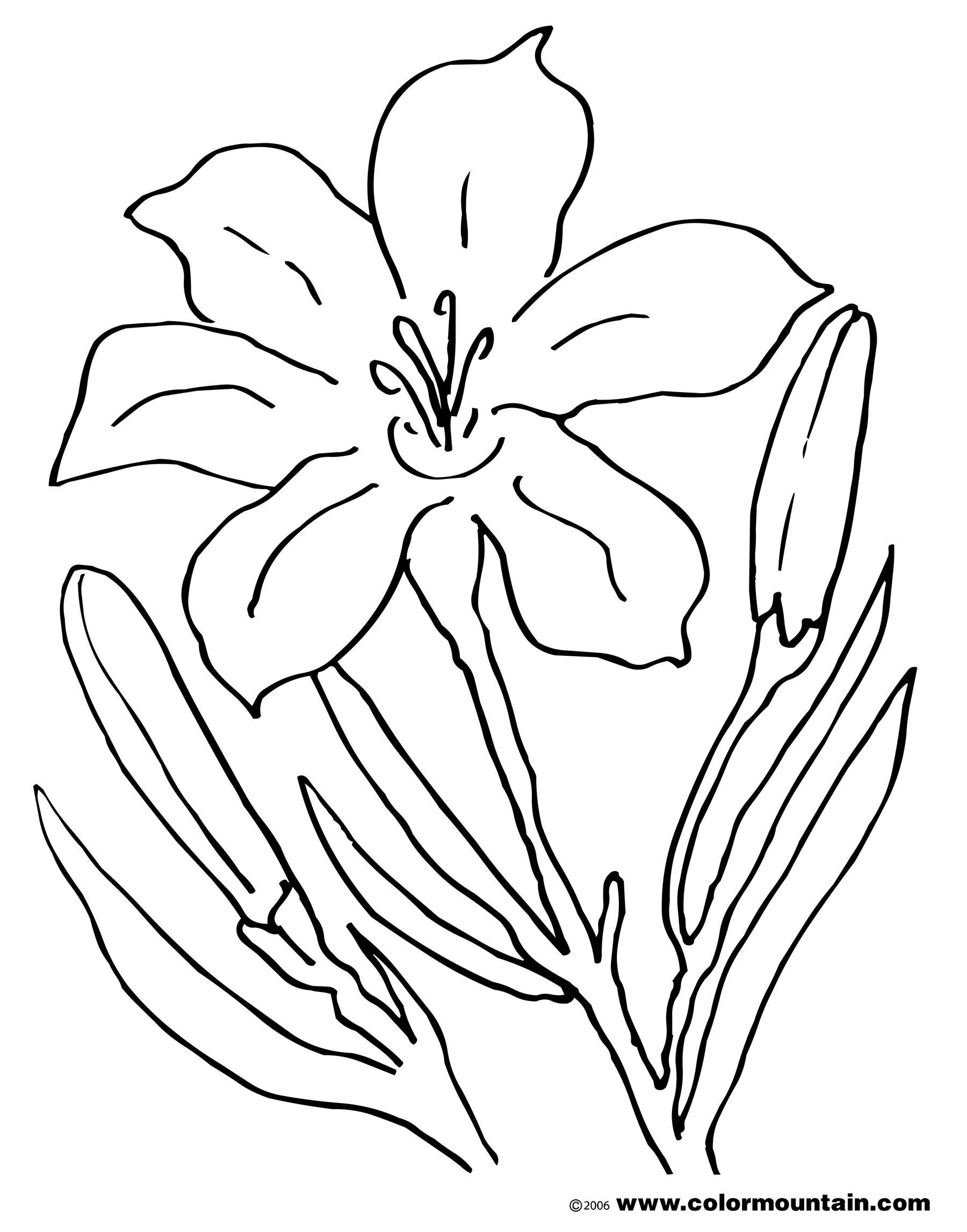 Easter Lily Coloring Page 33