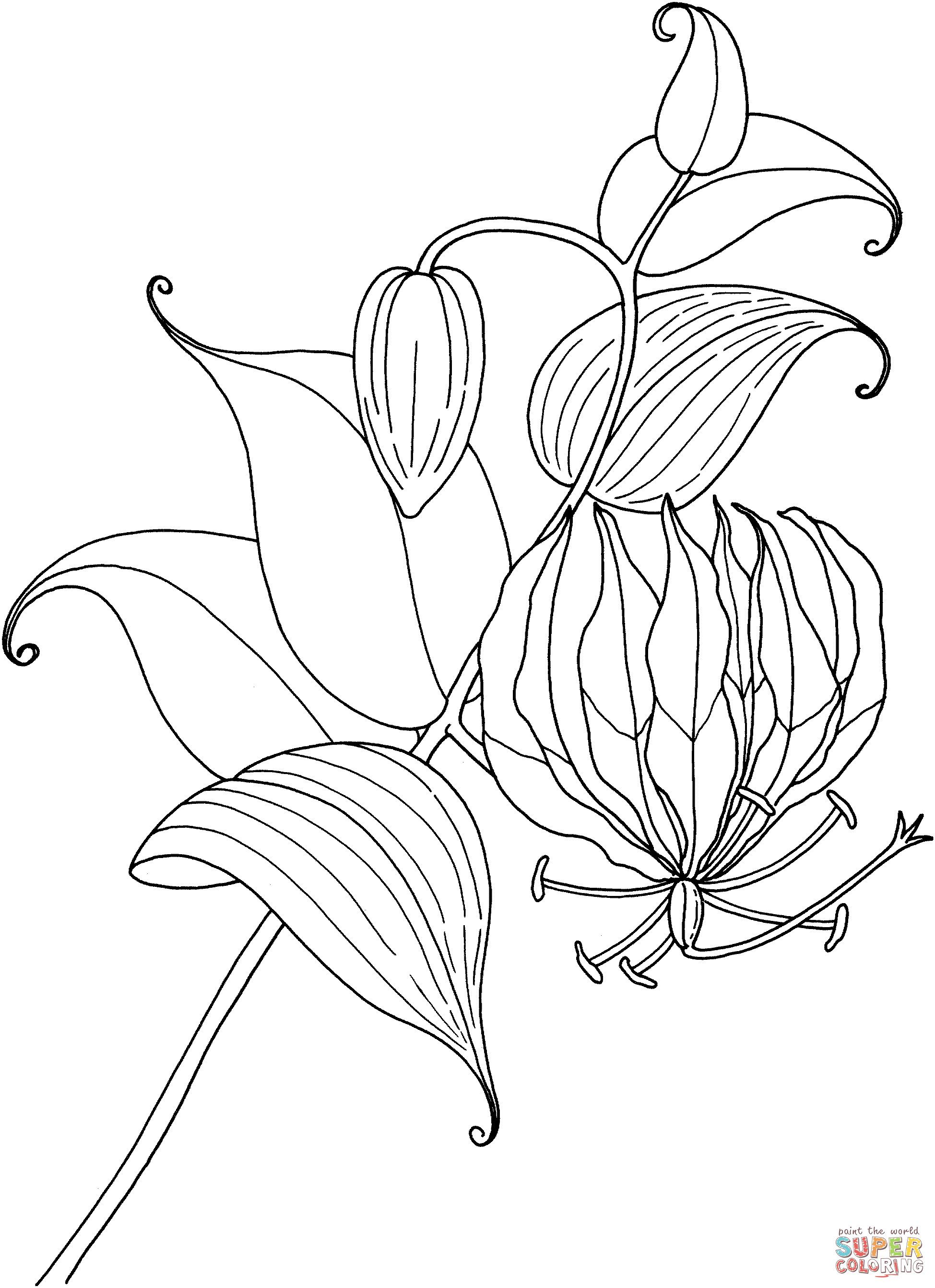 Easter Lily Coloring Page 4