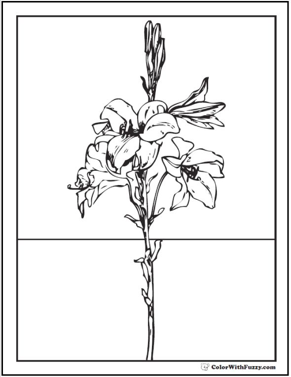 Easter Lily Coloring Page 43