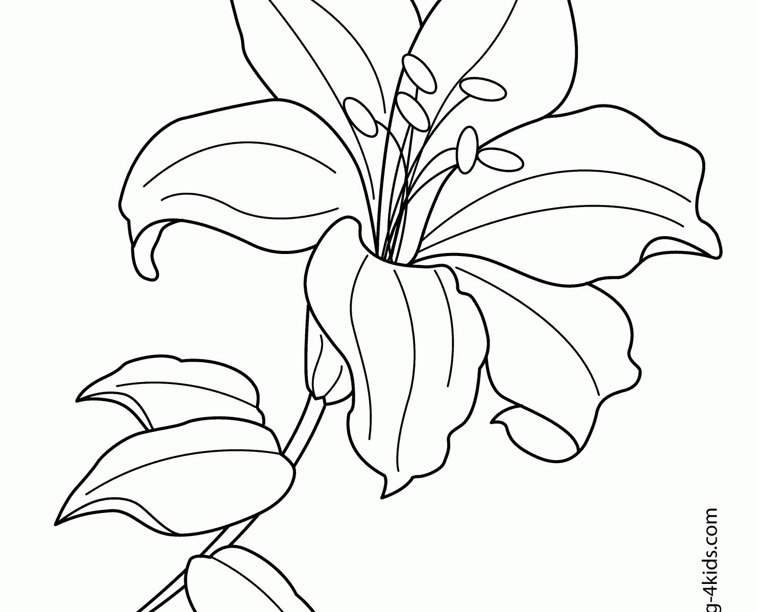 Easter Lily Coloring Page 5