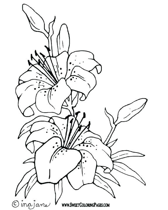Easter Lily Coloring Page 6